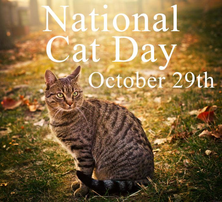 national-cat-day-2013
