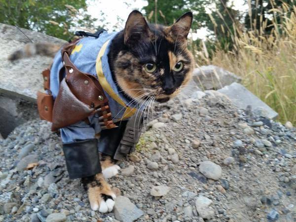 Cat Tumblr Fallout 2