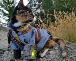 Cat Fallout tumblr 1